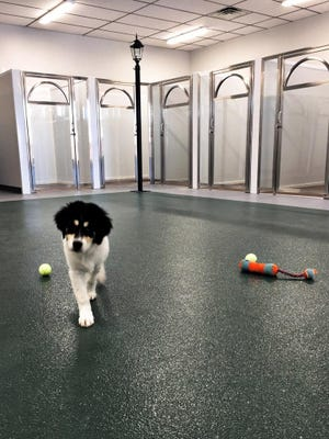 A four-legged client checks out The Bark Place boarding and doggie daycare, 1097 Mt. Vernon Ave., Marion. An open house is today from 5 to 7 p.m.