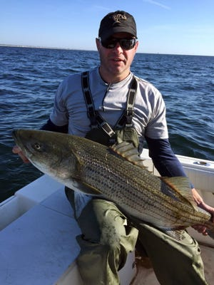 Large numbers of big striped bass are there for the taking in Monmouth County.