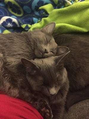 Rio and Suede cuddle together.
