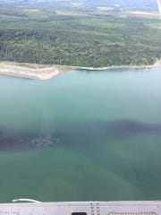 Hood Canal has changed colors as a result of a plankton