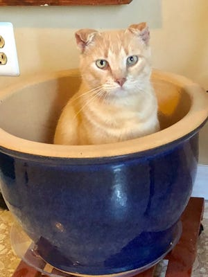Who knows where Max's life began. He was first discovered by a kind couple in Hobe Sound who discovered him hanging out with a group of homeless cats they feed.