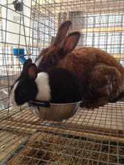 bunnies WEB ONLY.jpg