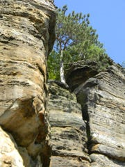 A tree grows in between the sandstone rock formations.