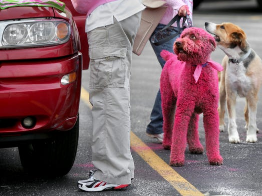 Oscar the Pink Poodle is ready to go as he and his owner Jim Fearin of Indianapolis, left, prepare to walk in the Komen Race for the Cure on Saturday, April 12, 2014 in honor of friend Kimberly Piercefield-Hobbs who passed away in December of 2013.