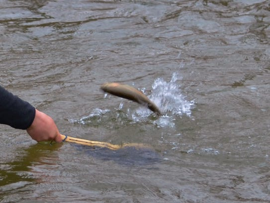 The trout season openers for Pennsylvania are just