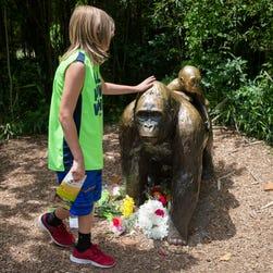 Cincinnati Zoo gorilla killed after boy falls into pen