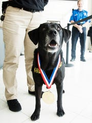 Alphie, A TSA explosives detectionK-9 works at Southwest