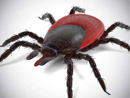 636603486006524670-courier-pst-ticks-lyme-disease-image.jpg