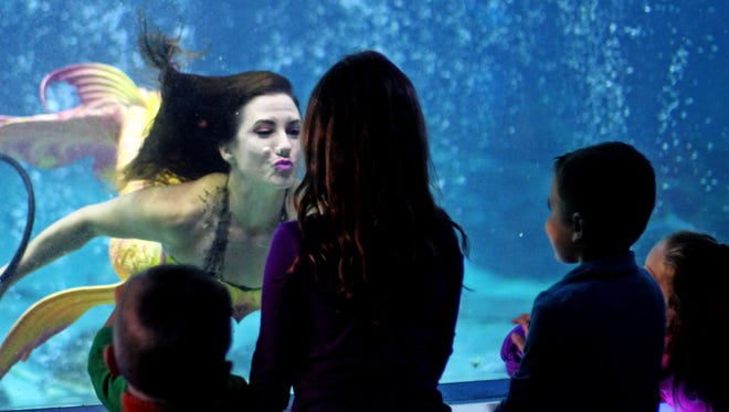 A 'mermaid' greets guests at an aquarium. On Nov. 5, Wands and Wishes Mermaids will dive in the 550,000-gallon Shark Realm exhibit and appear in one of Currents Ballroom's movie screen-sized windows as sharks, graceful stingrays and glittering schools of menhaden glide past.