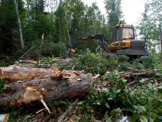 Logging in the Chequamegon-Nicolet National Forest.