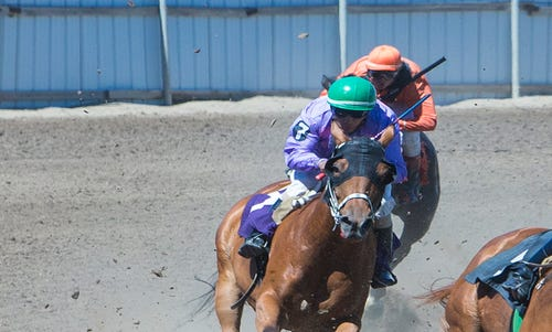 Horses clear the final turn during a racing heat on