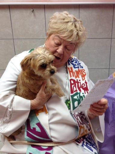Penny, a Terrier mix owned by Sharon White, is in