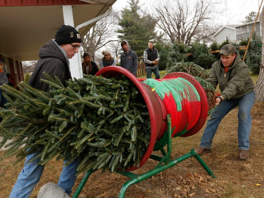 Iowa Christmas Tree Farms