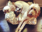 Chloe Grace Moretz showed some love for her family of pets with this perfectly posed snap.