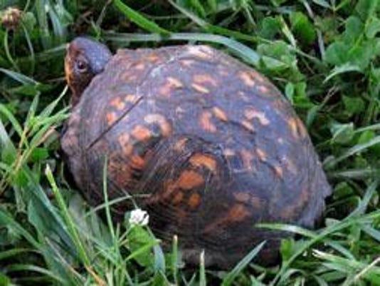 turtle-boxmcourtneyhra_original