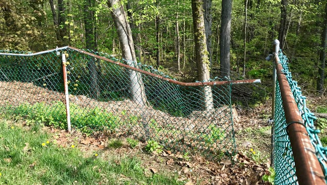 A black bear breaks down a fence on the way to a family's basement in the White Meadow Lake section of Rockaway Township in April.
