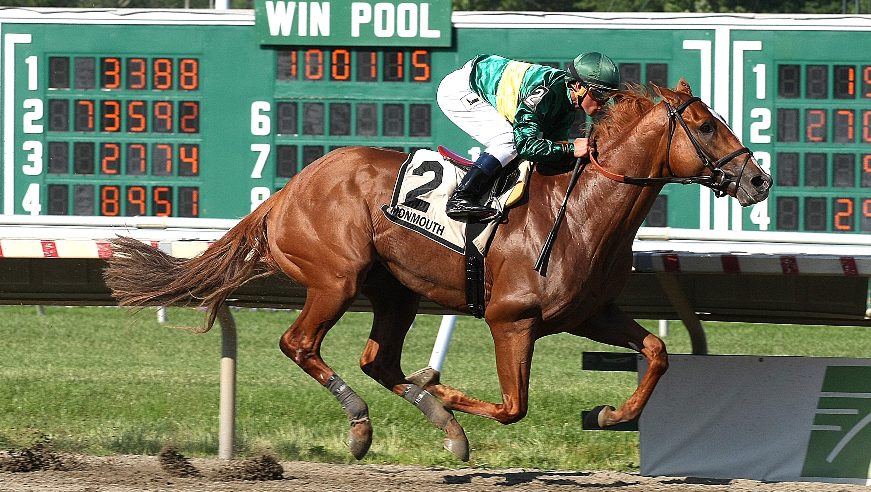 Horse racing haskell invitational likely next stop for timeline horse racing haskell invitational likely next stop for timeline after he romps in pegasus stakes falaconquin