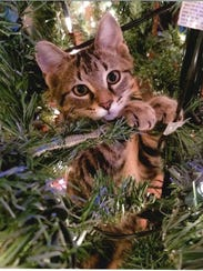 The Oak Harbor Public Library's first-ever Cutest Cat
