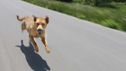 Health department officials are developing plans to deal with dogs running at large and dogs that bite people.