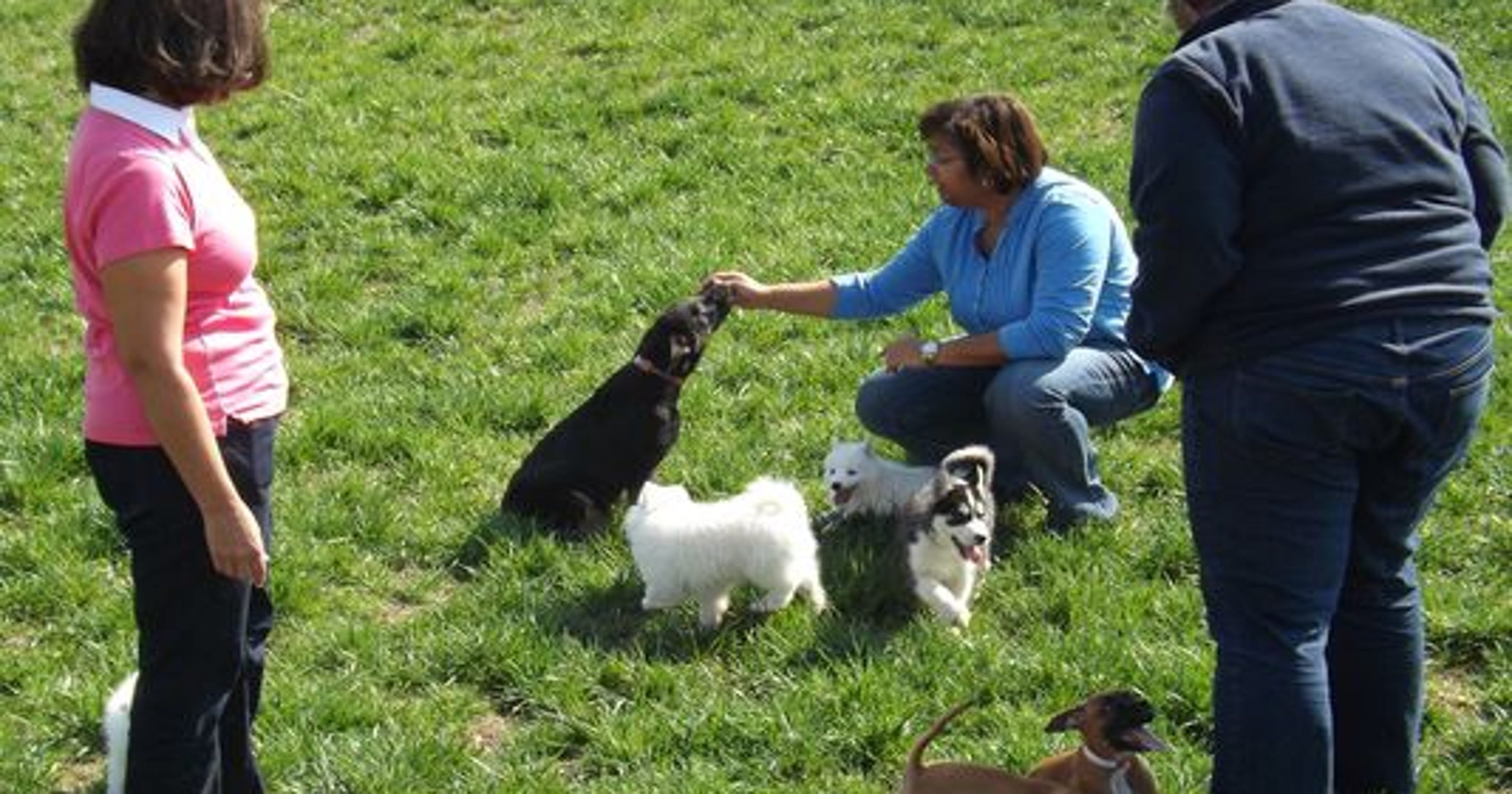 S  Indiana Amish aim to restore dog breeding rep