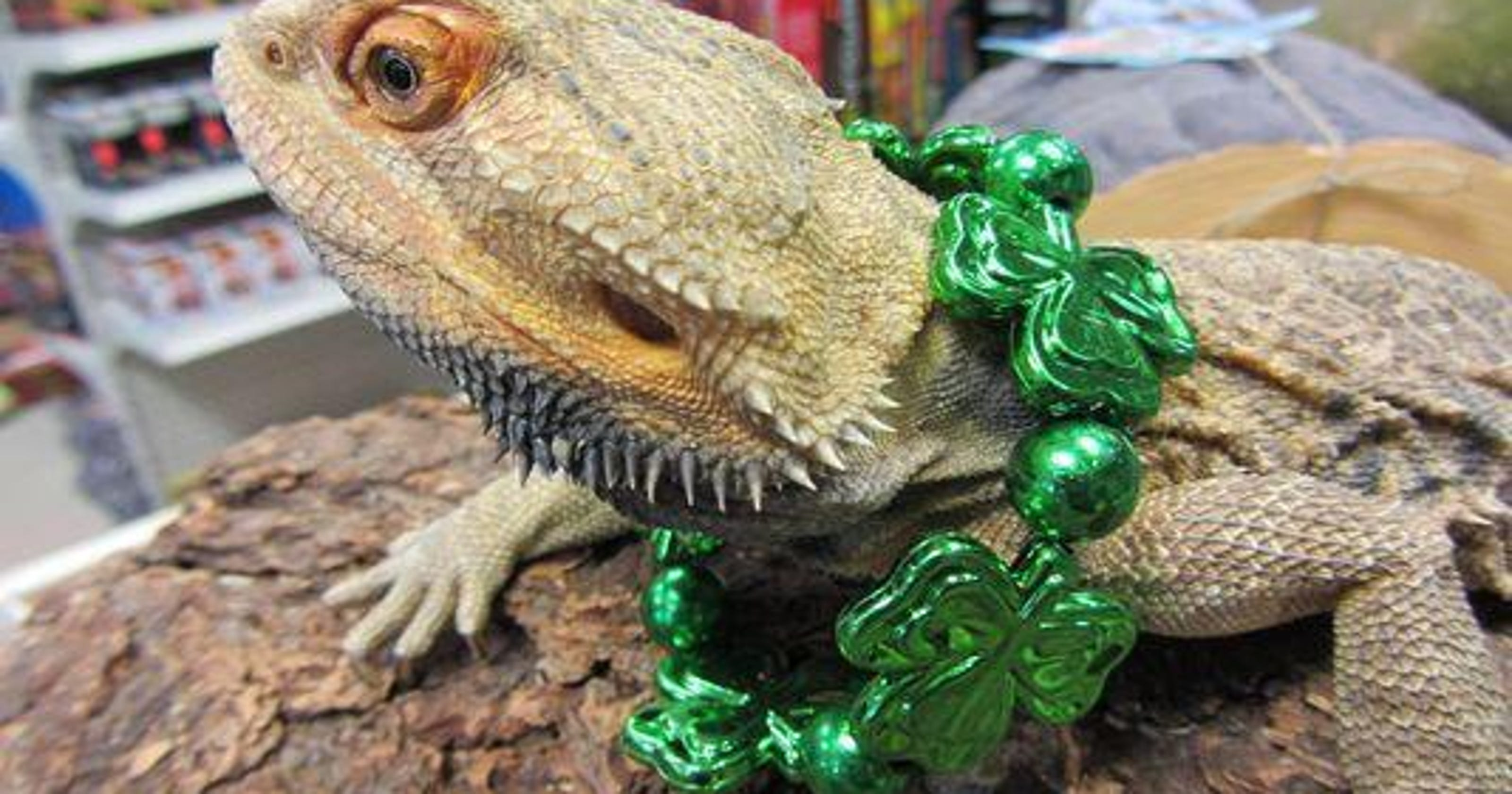 Livonia pet store recovers some of its stolen reptiles