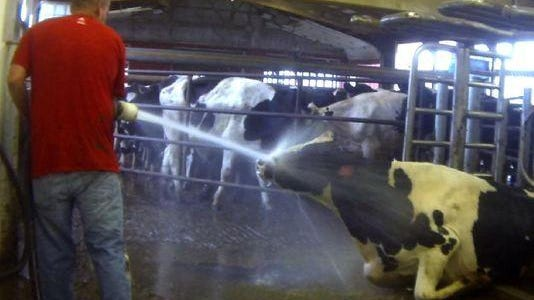 Video still from a hidden camera recording taken by the activist group Mercy for Animals.