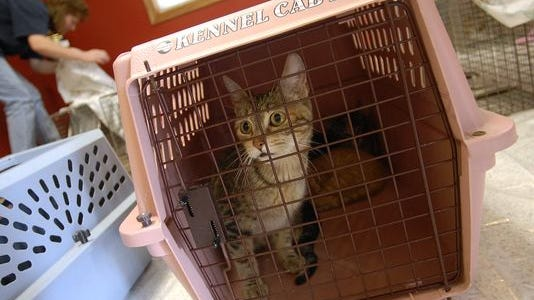 """Wausau is considering a """"trap, neuter and release"""" plan for stray and feral cats."""