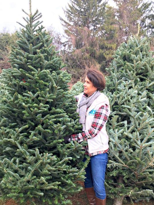 DIY-Dutchess---Christmas-tree-tips---Fraser-Fir.jpg