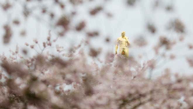 The Goldman, atop the Oregon State Capitol, is seen through rain soaked cherry blossoms on Wednesday, March 16, 2016, at the Capitol Mall in downtown Salem, Ore.