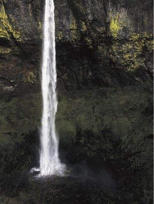Elowah Falls is the second-highest waterfall in the Columbia River Gorge, second to Multnomah. The short hike to the falls through John B. Yeon State Park features Oregon grape and trillium.