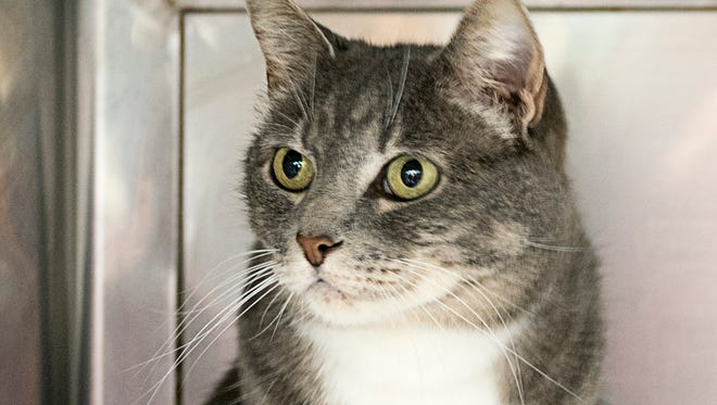 East County Pet of the Week is Qby.