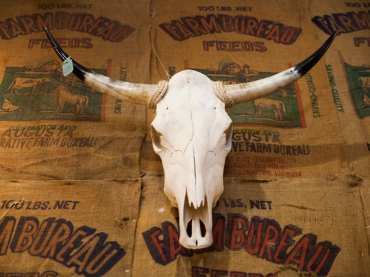 A cow skull hangs on display inside Cherish Every Moment's new store in downtown Staunton on Wednesday, Oct. 7, 2015.