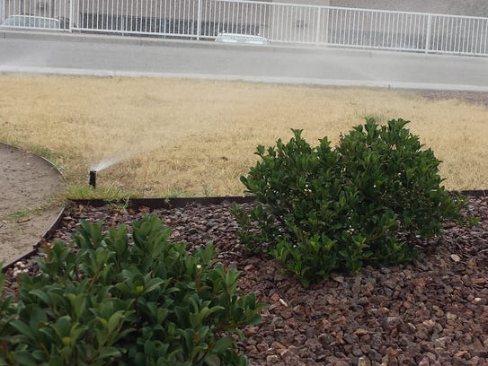 Dormant Bermuda grass requires no water from mid-November