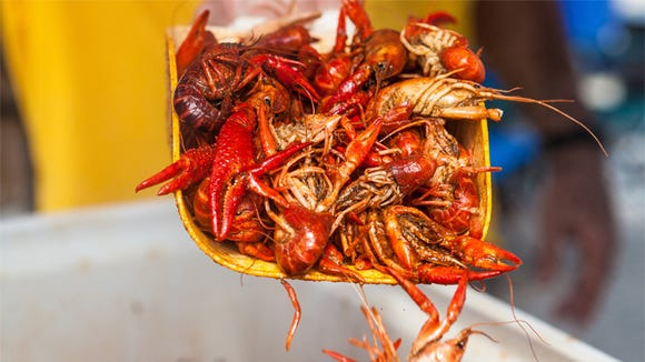 Boiled crawfish are one of Louisiana's most popular delicacies.