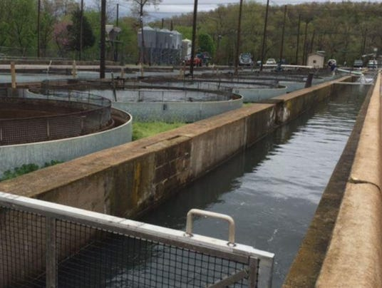 Virus found in trout at agfc hatchery for Arkansas game and fish fishing report