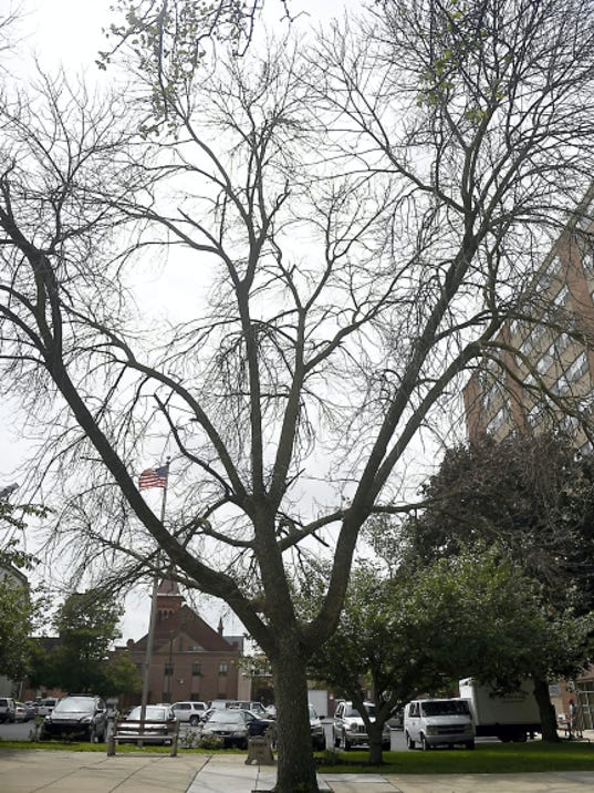 Several shade trees in the city are dying, but Lebanon's Shade Tree Commission may be coming back to life after a decade.