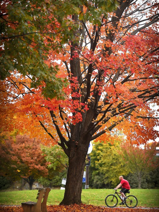 A cyclist rolls through the Lebanon Valley Rails to Trail in Lebanon's Fisher Veterans Memorial Park Tuesday afternoon. Autumn's last hurrah may have been Tuesday, as predicted rain moves into the area, which will force down what is left of nature's colorful pallette.