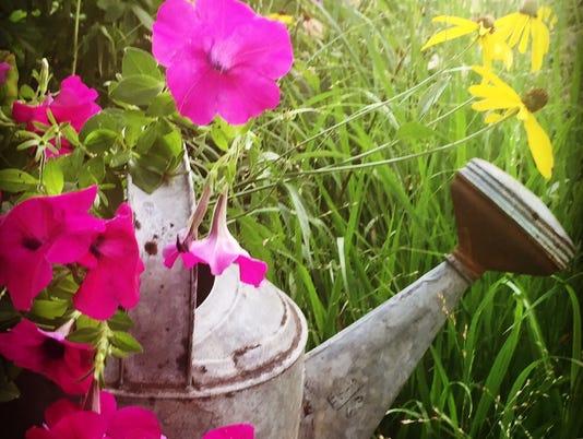 636243502169582907-APCBrd-08-23-2016-Crescent-1-C002-2016-08-22-IMG-garden-watering-1-1-FHFEBVA0-L868455616-IMG-garden-watering-1-1-FHFEBVA0.jpg