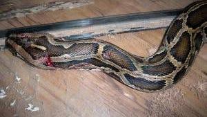 stabbed-python