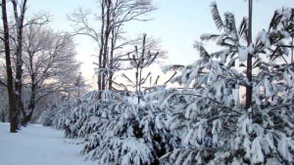 021412-sub-WZ-Hombach-Pines.jpg