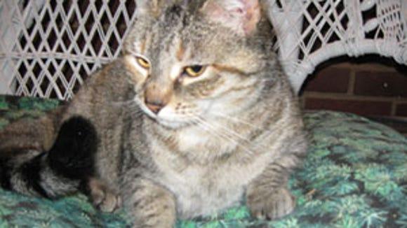 found-sandycat