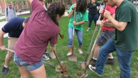 Students from the York College Student Chemistry Society and Alpha Chi Sigma remove sod in preparation for the planting of a tree.