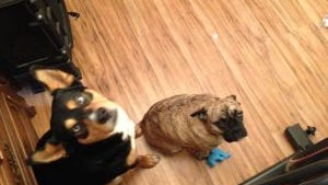 Norman and Odie, missing from their Upper Allen Township home.