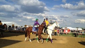 California Chrome in the post parade for the Preakness Stakes at Pimlico. Taken with my iPhone