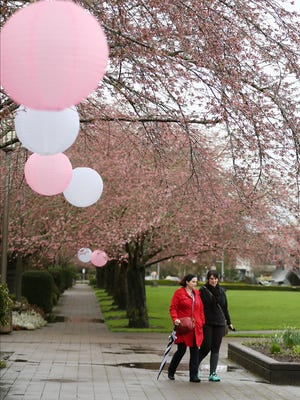 Tiffany Crowley, left and Dana Vandeberghe walk beneath the cherry trees on Saturday, March 18, 2017, during Cherry Blossom Day at the Oregon State Capitol in Salem.