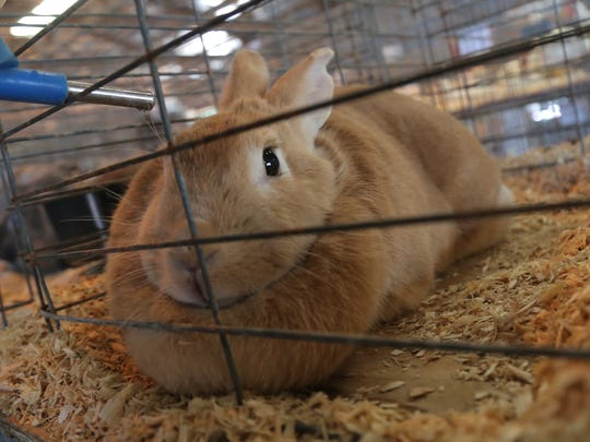 Many animals will be on exhibit at the Marion County Fair in 2018.