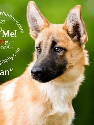 Tristan, a shepherd mix, is about six months old and has a great personality, shelter staff members say.