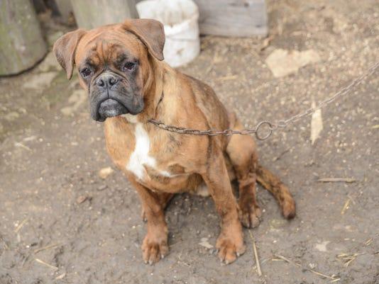 dog-tether