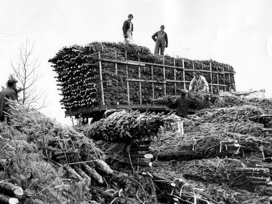 Men load cut and bound Christmas trees onto a truck in Morristown. The trees are piled high and bound together into small clumps. The photo was taken in December of 1960.