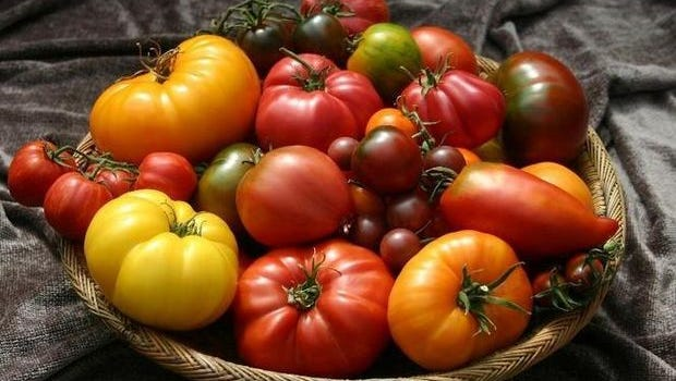 There are plenty of varieties of tomatoes to choose, and you can grow them at home.